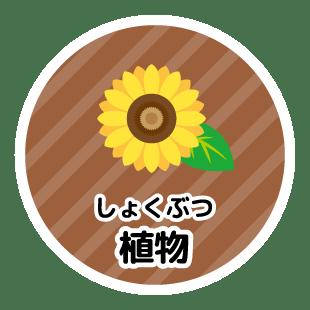 植物(しょくぶつ)